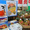 沖縄に夏が来た!梅雨明けのタイミングでおんなの駅 2017年のマンゴー通販予約が始まっています