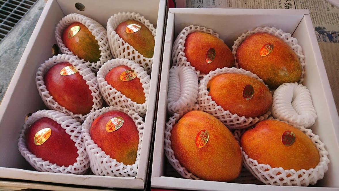 2017沖縄県産マンゴーが終わりに近づいてきていますよ
