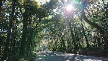 【東京・代々木】寿司 高瀬でランチ&明治神宮をお散歩